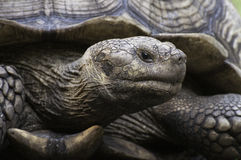 Tortoise Close Up Stock Image