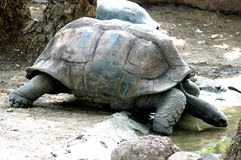 Tortoise close in the Zoo Stock Image