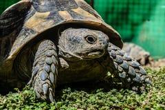 Tortoise closeup Royalty Free Stock Photos