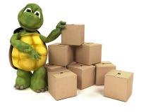Tortoise con le caselle per trasporto Immagine Stock