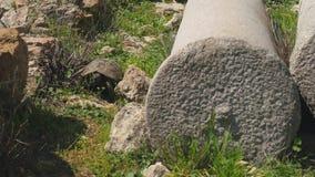 Tortoise crawling green grass ancient greek column ruins
