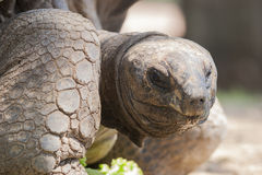 The tortoise Royalty Free Stock Images