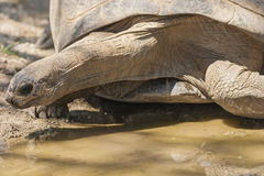 The tortoise Stock Photos