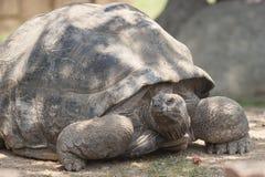 The tortoise Stock Photography