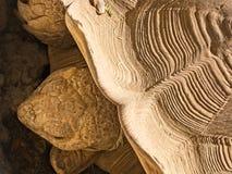 Tortoise details Stock Images