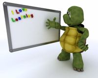 Tortoise with drywipe markerboard Stock Photo