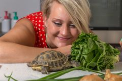 Tortoise eating roman salad while young woman looks at him. Turtle eating roman salad while young woman looks at him Stock Images