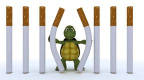 Tortoise escaping cigarette prison Royalty Free Stock Image