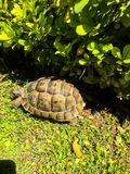 Tortoise on green stock photos