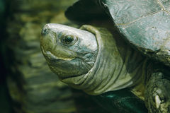 Tortoise. The head close-up of a land tortoise Stock Photo