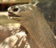 Tortoise head Stock Image