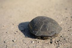 Tortoise in home Royalty Free Stock Image