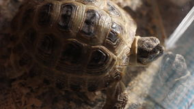 Tortoise at home stock video footage