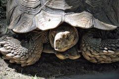 Tortoise Stock Photo