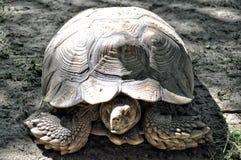 Tortoise Stock Photos