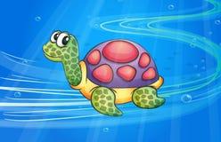 A tortoise Royalty Free Stock Photos