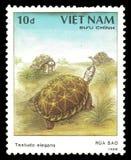 Tortoise indiano della stella Fotografie Stock