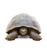 Tortoise isolated Stock Photos