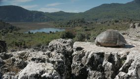 A tortoise looking from the top of amphitheatre stock video footage