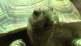 Tortoise Lub ? zdjęcie wideo