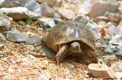 Tortoise on a mountain stones royalty free stock photos