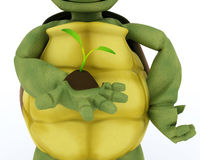 Tortoise nurturing a  seedling plant Stock Photography