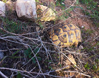 Tortoise over mountain. Around small rock Stock Photography
