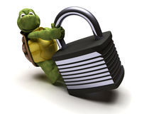 Tortoise with padlock Royalty Free Stock Photos