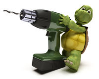 Tortoise with power drill Stock Photo