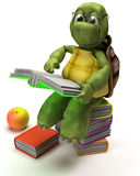 Tortoise reading a book Royalty Free Stock Image