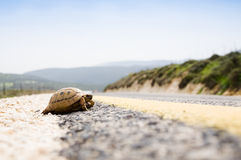 Tortoise On The Road Stock Photography