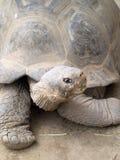 Tortoise at San Diego Zoo stock photo