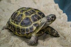 Tortoise on the sand closeup stock photo