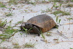Tortoise in the sand Stock Photos