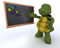 Tortoise with school chalk board Royalty Free Stock Images