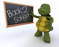 Tortoise with school chalk board back to school Stock Photos