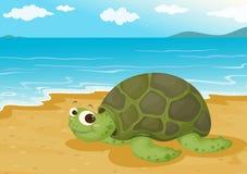 Tortoise on sea shore Stock Photos
