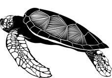 Tortoise Stock Image