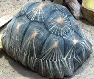 tortoise shell Stock Images