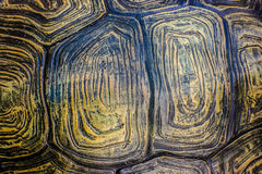 Tortoise shell background. Abstract background. Texture caraspace of a Tortoise shell Stock Photos