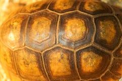 Tortoise shell background. Large turtle shell texture beautiful background horizontal Stock Image