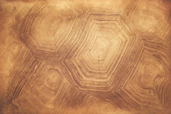 Tortoise shell background Royalty Free Stock Photos