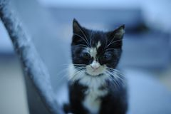 Tortoise shell cat royalty free stock photography