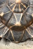 Tortoise shell Royalty Free Stock Photos