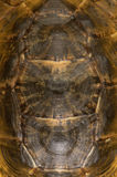 Tortoise shell detail royalty free stock photos