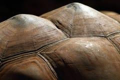 Tortoise Shell Detail Stock Images