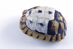 Tortoise shell. Tortoise kaplumbağa  shell  nature turtle Royalty Free Stock Photo
