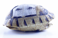 Tortoise shell. Tortoise kaplumbağa shell nature turtle Stock Image