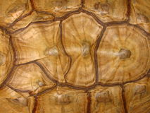 Tortoise Shell Pattern Royalty Free Stock Images