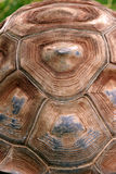 Tortoise shell Stock Photo